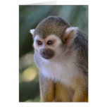 Amazing Squirrel Monkey
