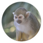 Amazing Squirrel Monkey Plate