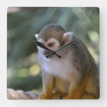 Amazing Squirrel Monkey Square Wall Clock