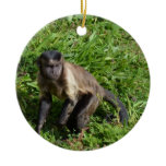 Capuchin Monkey Mugging for the Camera Ceramic Ornament