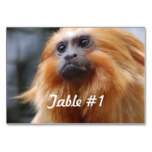 Golden Lion Tamarin Monkey Card