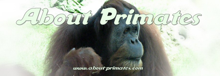 About Primates